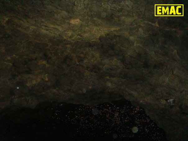 emac-cave-wildlife-bats